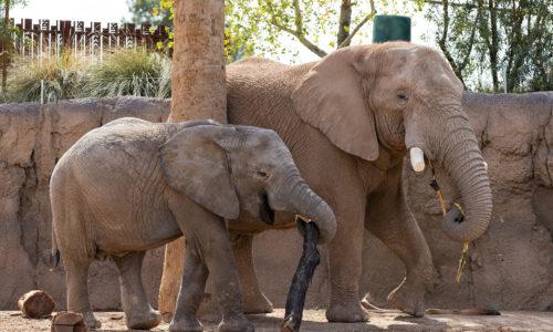 elephant8487z